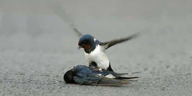 Kuşu Ölen Çocuğa Başsağlığına Giden Peygamber