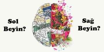 Beyninizin Hangi Lobunu Kullanıyorsunuz?