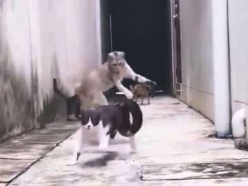 Pusuya Düşürülen Kedi ve Efsane Kaçış