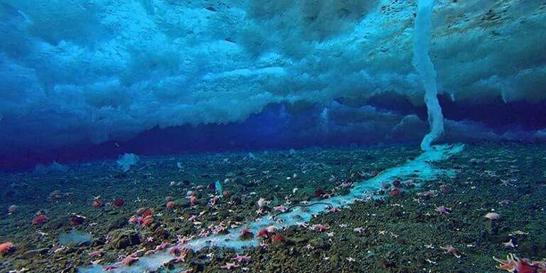 Su Altı Buz Saçağı