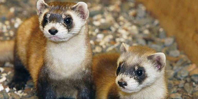 Onların Da Duyguları Var: Hayvanlar Alemine Ait 10 İlginç Bilgi
