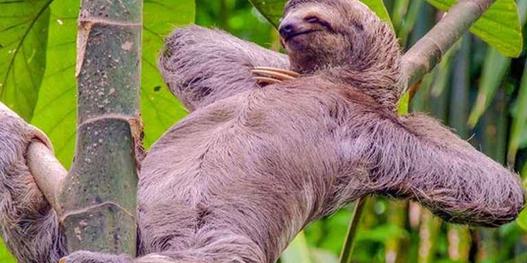 Tüm Gün Yatar: Tembel Hayvan