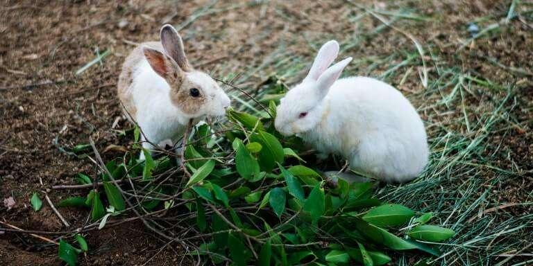 Tavşanlar Sadece Havuç Yemez