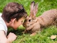 Tavşanlar Hakkında