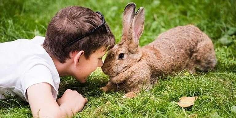 Tavşanlar Hakkında 10 Büyüleyici Gerçek