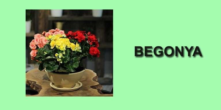 Evde Bakılabilecek Çiçekler