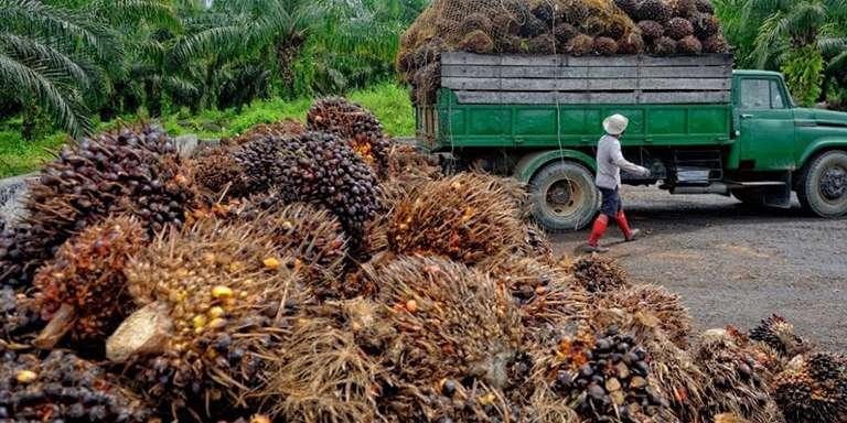 Palm Yağı Hakkında Bilinmesi Gerekenler