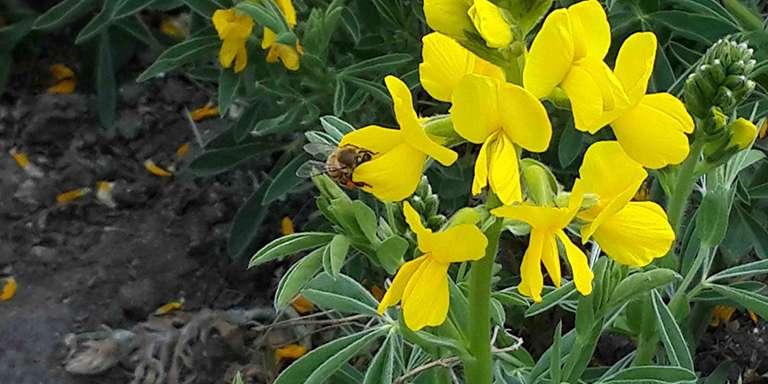 Türkiye'de yetişen bitki türleri