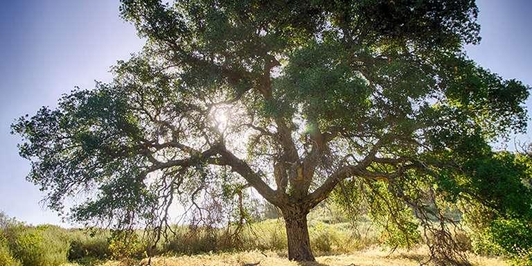 Türkiye de yetişen endemik bitki türleri