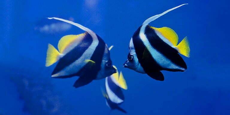 Balıklar Hakkında Çok Şaşırtıcı 10 Bilgi