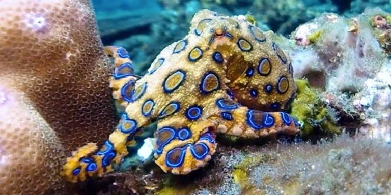 Hiç Görmediğiniz En İlginç 10 Deniz Canlısı