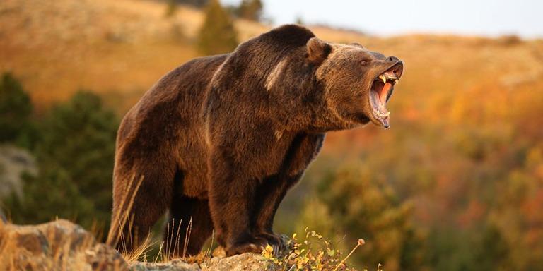 Yeryüzünde Yaşayan Alanında Başarılı Vahşi Hayvanlar