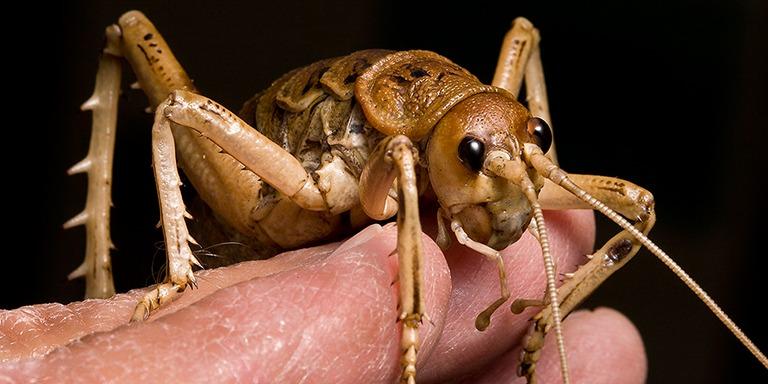 Dünyada Yaşayan En İlginç Böcek Türleri