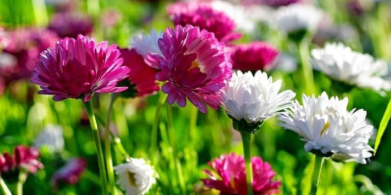 Mucizeler Yaratan Faydalı Şifalı Bitkiler