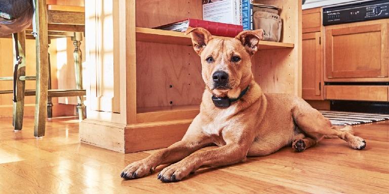 Evcil Hayvan Bakımı Hakkında Doğru Bilinen Yanlışlar