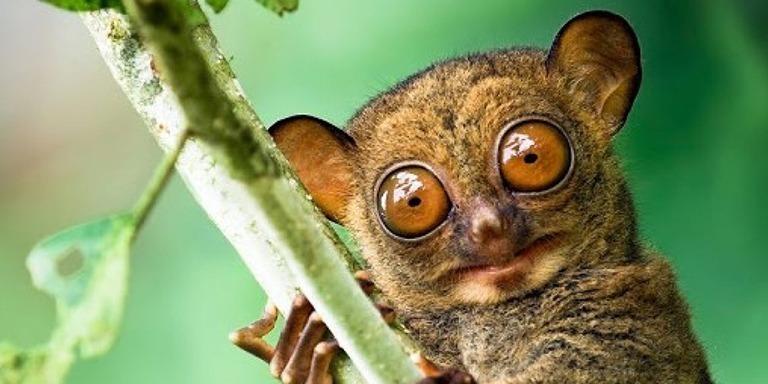 Dünya Üzerinde Varlığı Pek Bilinmeyen Hayvan Türleri