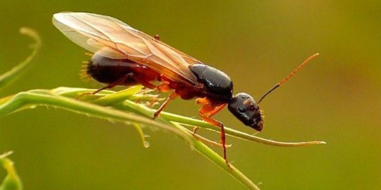 Çalışkanlığın Timsali Karıncalar Hakkında İlginç Bilgiler