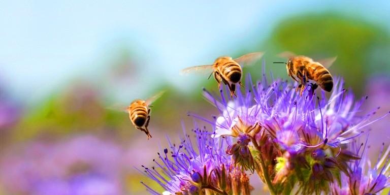 Arıların Harika Canlılar Olduğunu Gösteren Gerçekler