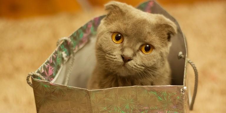 Sadece Kedi Sahiplerinin Anlayabileceği Garip Durumlar
