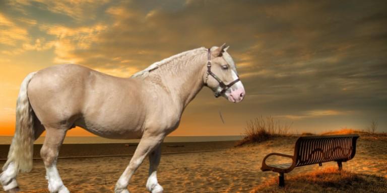 Asil Görünüşleriyle Fark Yaratan Dünyanın En Güçlü Atları