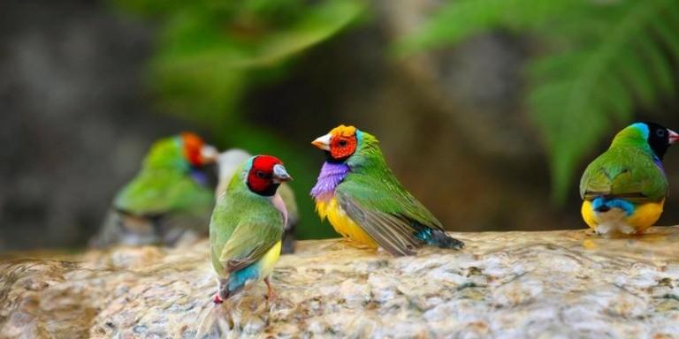Rengârenk Tüylere Sahip En İlginç Kuş Türleri