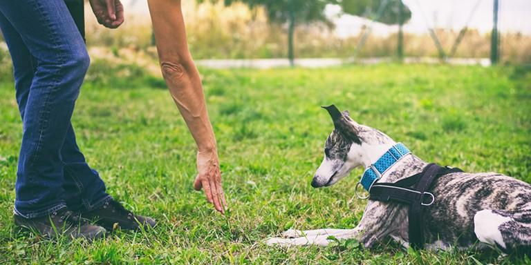 Kendi Köpeğinizi Eğitmeniz İçin Uygulamanız Gereken Faydalı Yöntemler