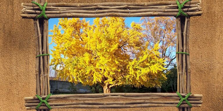 Yeryüzündeki Eşsiz Yaşam Kaynaklarından Olan En Güzel Ağaçlar
