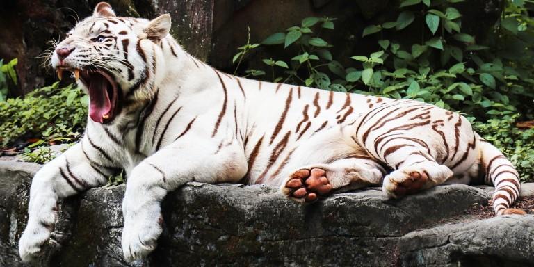 Vahşi Doğada En Güçlü Çeneye Sahip Hayvanlar
