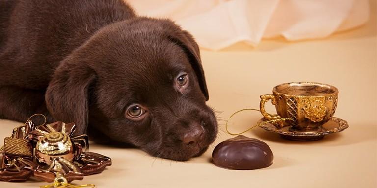 Köpeklerin Asla Tüketmemesi Gereken 10 Yiyecek