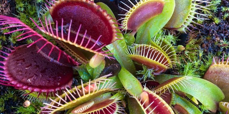 Dünyada Hâlâ Yaşamakta Olan En Vahşi Bitkiler