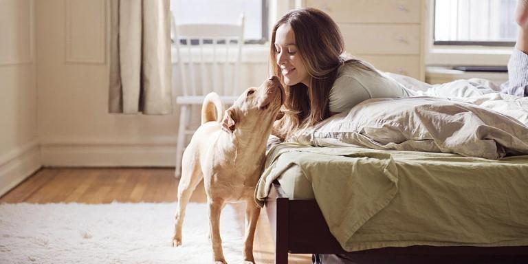 Evcil Hayvan Sahibi Olmak İsteyenlerin Mutlaka Bilmesi Gerekenler