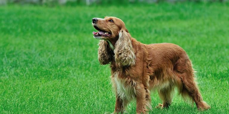Kişiliğinize Göre Yol Arkadaşınız Olacak En Doğru Köpek Irkı