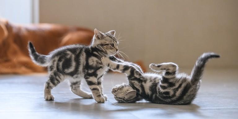 Evinizde Kedi Beslemenin İyi Gelebilecek İlginç Faydaları