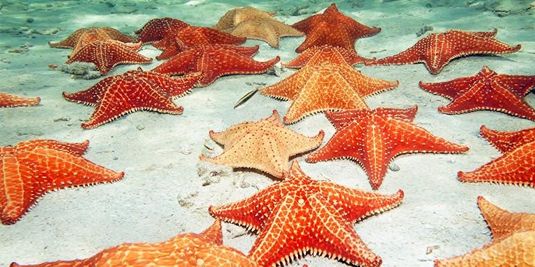 Görünüşleriyle Büyüleyen Deniz Yıldızları Hakkında İlginç Bilgiler