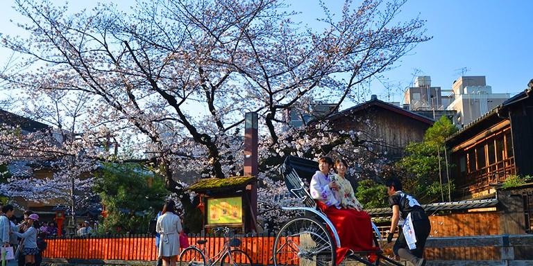Güzellikleriyle Büyüleyen Japon Kiraz Çiçeklerinden Gelen Bahar Müjdesi