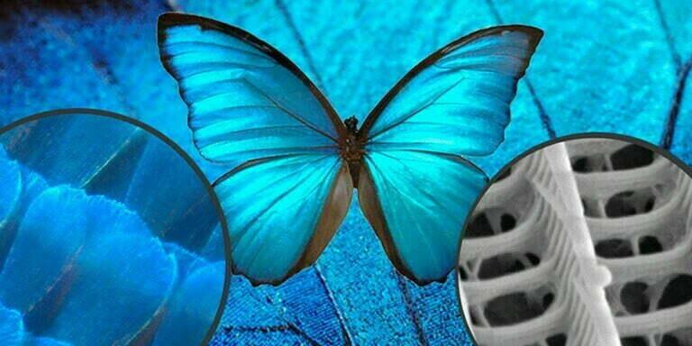 Doğadan Esinlenen Tasarım Biyomimikri Hakkında Her Şey