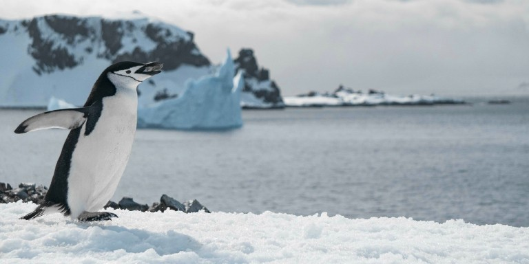 Kutuplarda Yaşayan 10 Hayvan Türü